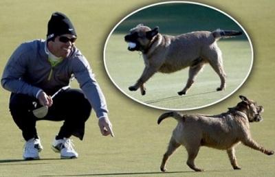 12+10+Dog+with+Paul+Casey%27s+ball.jpg